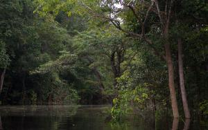 BRA1004NegroBackwater.jpg