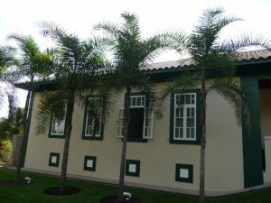 Syagrus oleracea -1 800x600.jpg