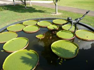 Water lily pad 800x600.jpg
