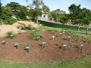 dwarf Syagrus species - new mound planting.jpg