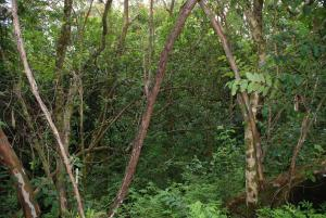 WBG_Rainforest_090813.JPG