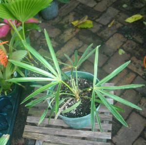 plants_275b_009.JPG