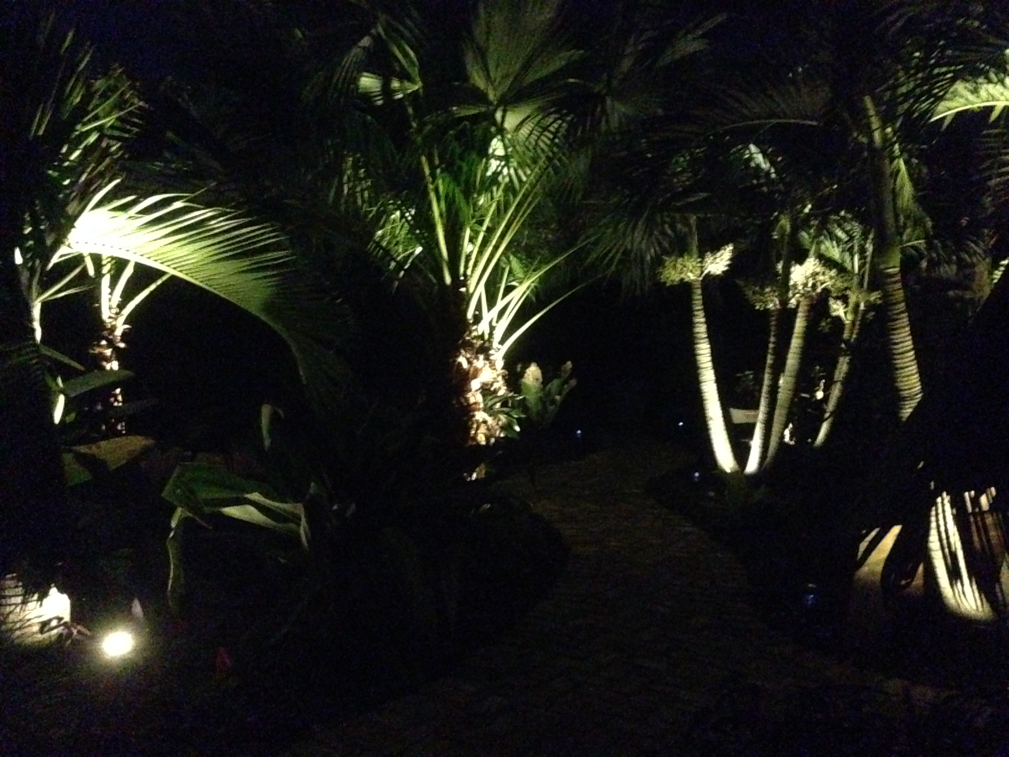 Lighting palms at night discussing palm trees worldwide palmtalk as promised a few pics please keep in mind im just finishing this walksitting area so there might be some tools of the trade in the pics still aloadofball Image collections