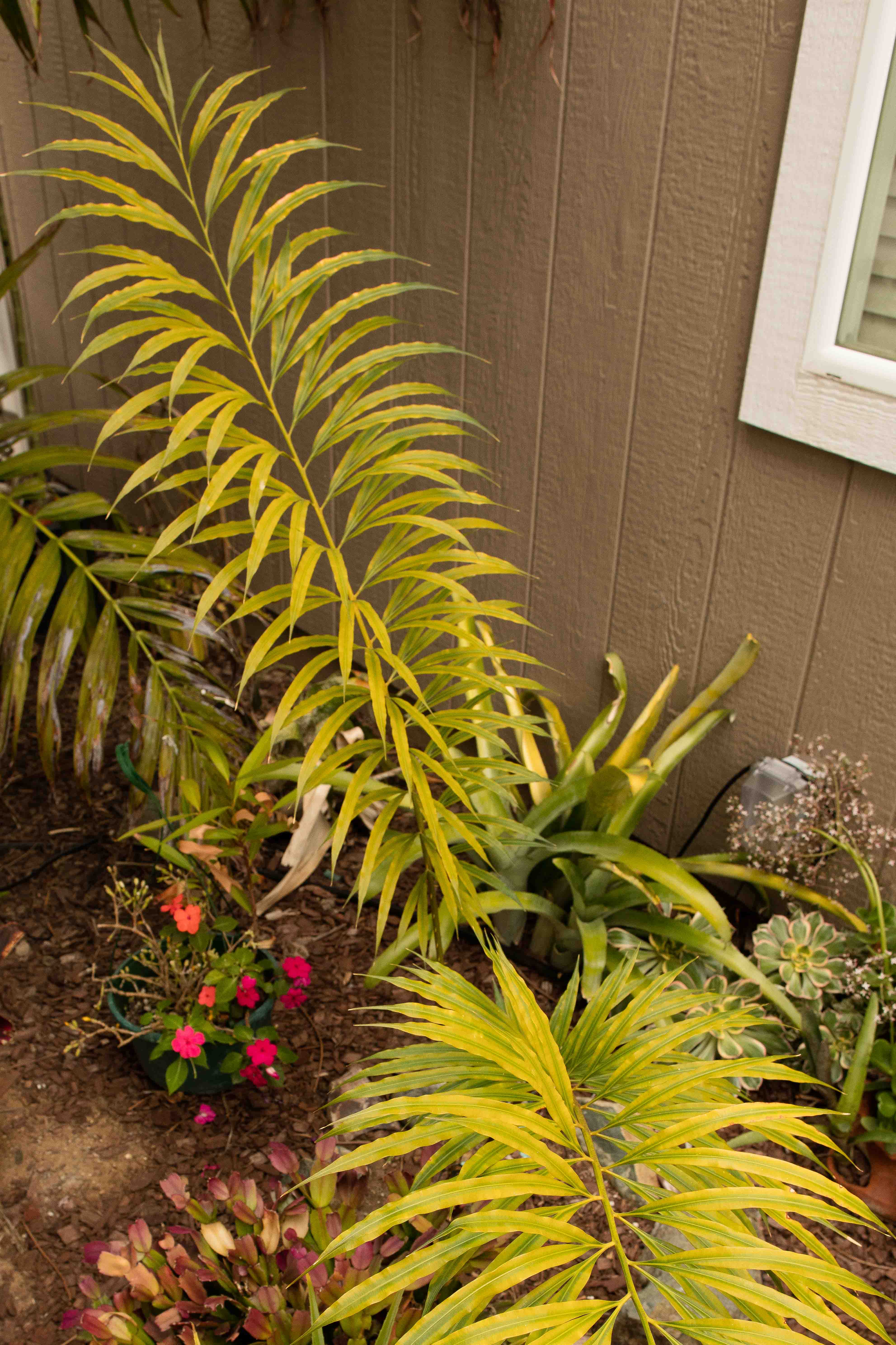 A great cycad to include in a palm garden - TROPICAL LOOKING PLANTS ...