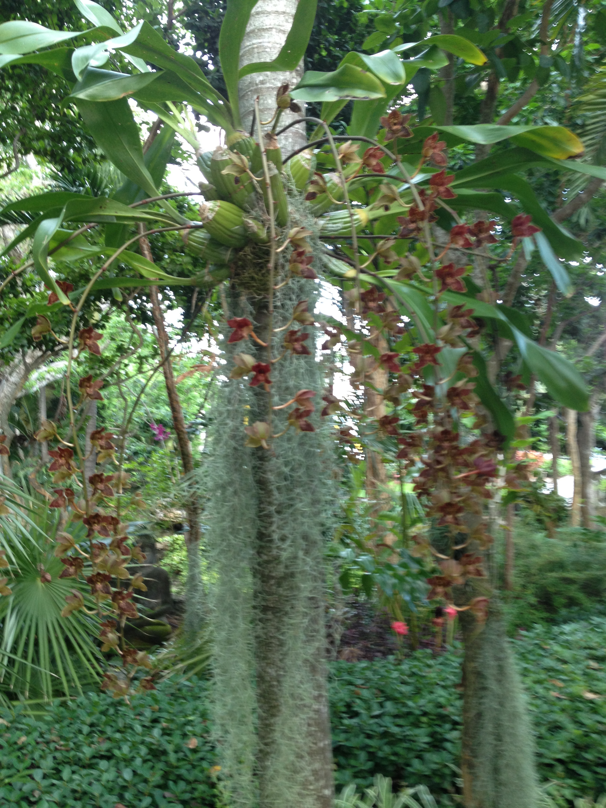 Orchids On Palms Discussing Palm Trees Worldwide Palmtalk