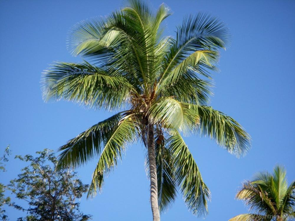 Your top 3 Favorite PALMS! - DISCUSSING PALM TREES ...