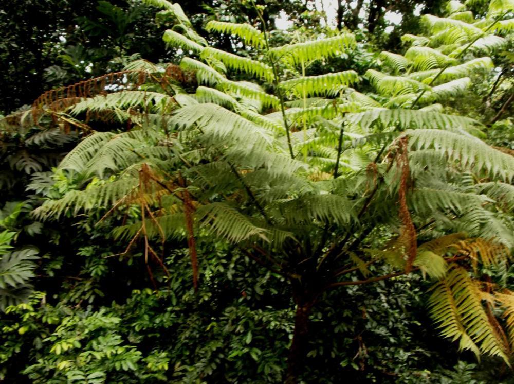 587558c0151eb_TreeFern0912-8-16.thumb.JP