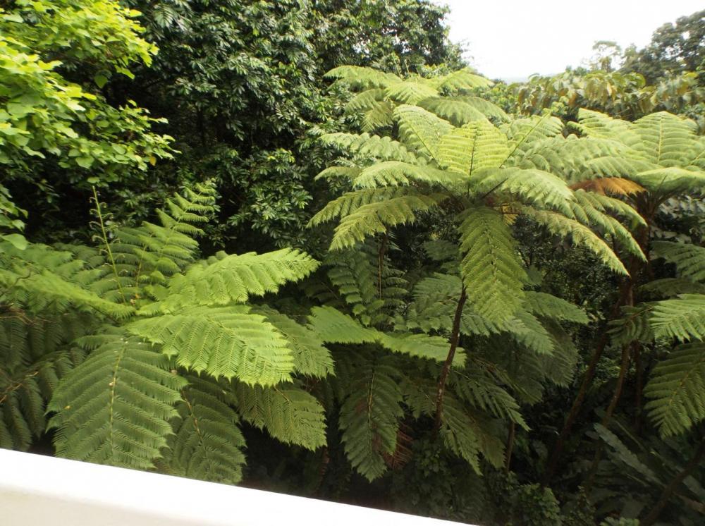 587558cd6658a_TreeFern1012-8-16.thumb.JP