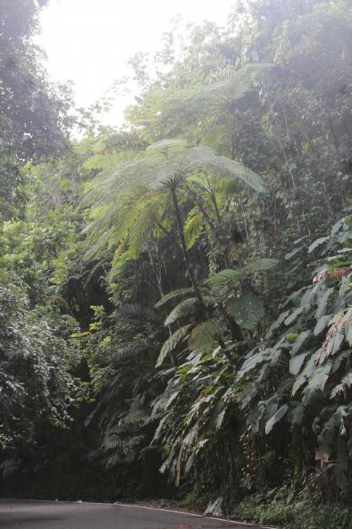 El Yunque (75).jpg