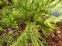Lydie's Palms