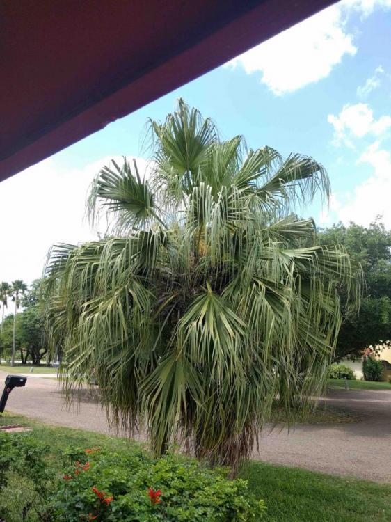palm habit 2.jpg