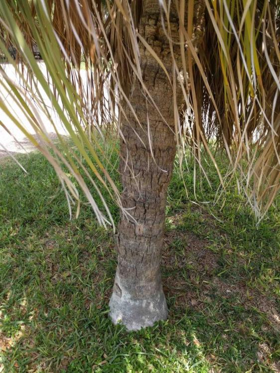 palm trunk.jpg
