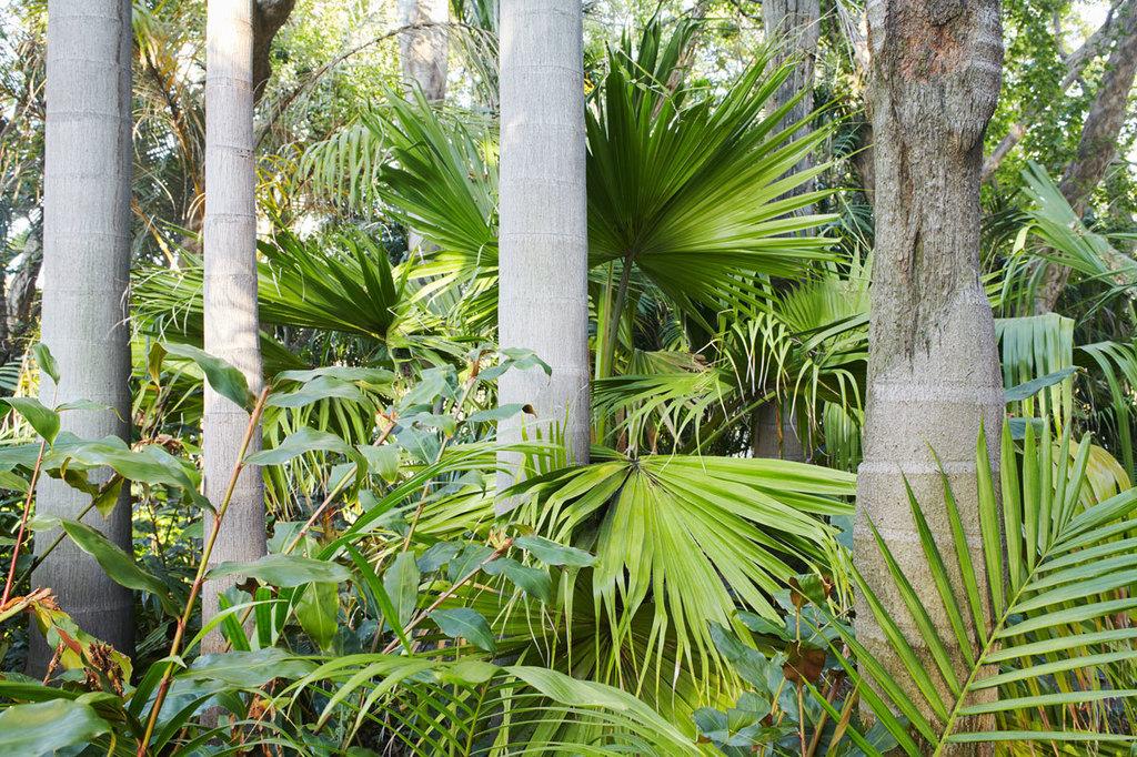 045_palmetum1510_12624_CA_DUP.jpg