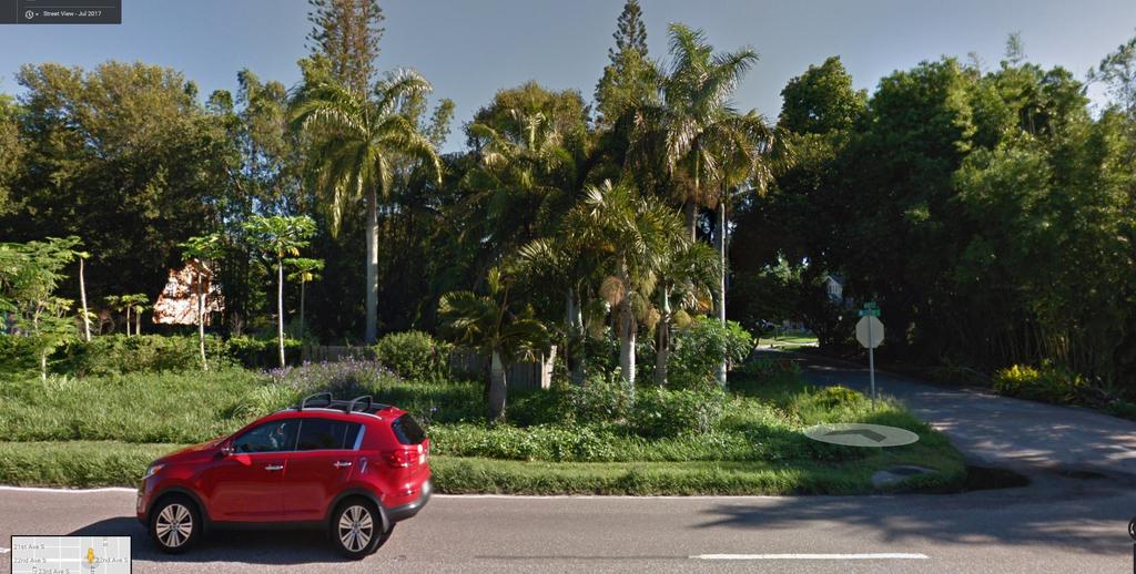 bottle palms.jpg