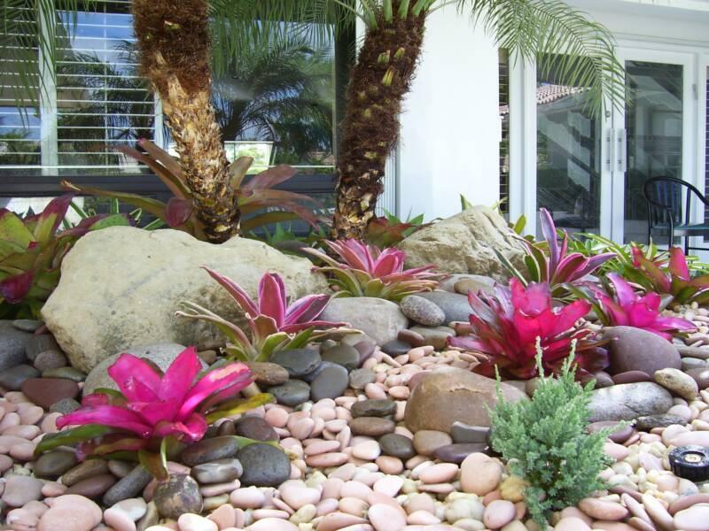 Bromeliad garden 1.jpg