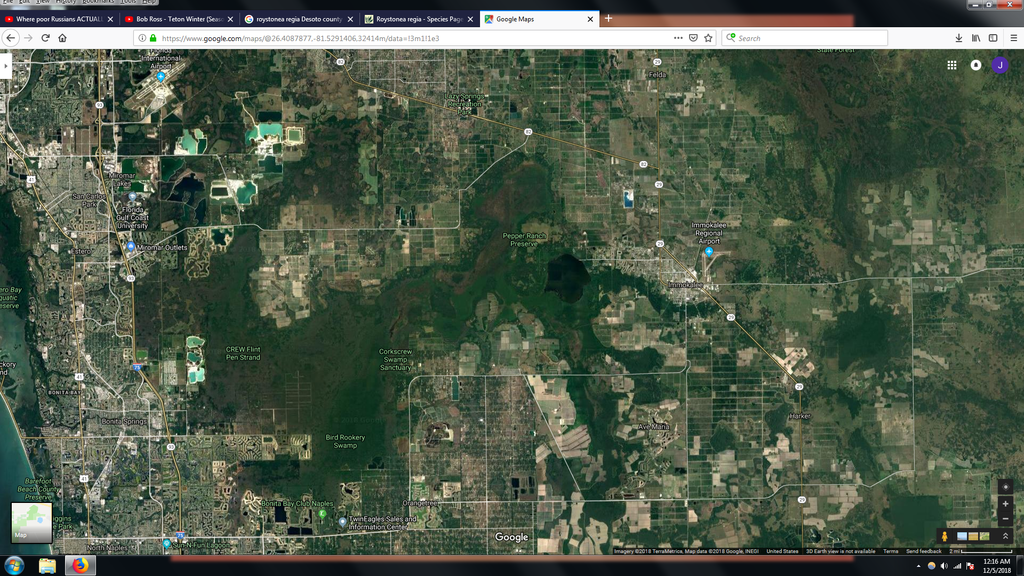 Corkscrew swamp.png