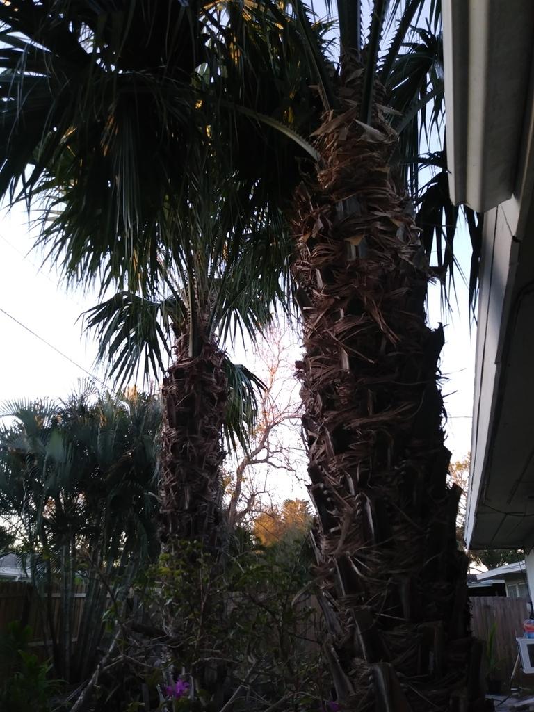 taraw palms.jpg