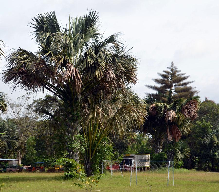The Garden of Ochopante