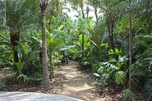 Jungle palm walk_5992 NN.JPG