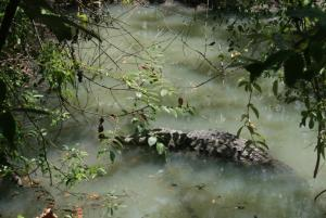 River crocodile.JPG