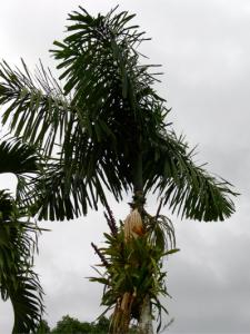 palm_bromeliad.jpg