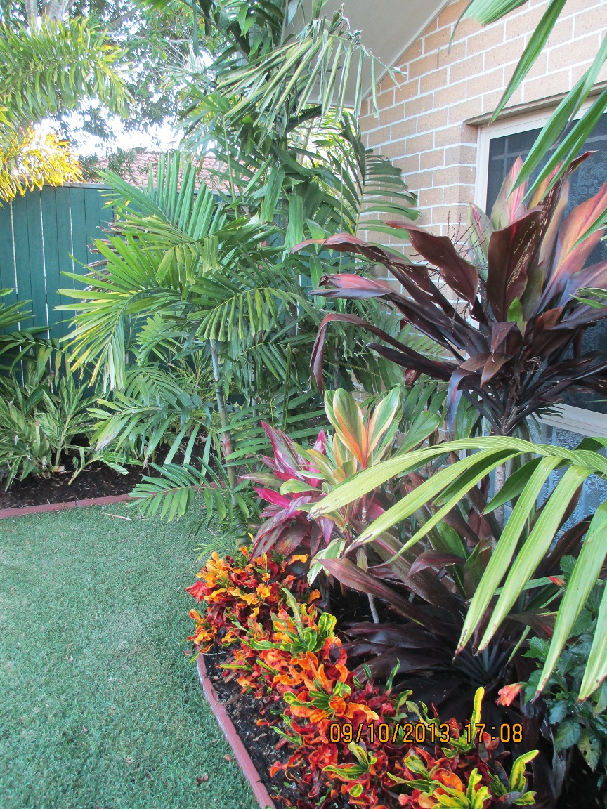 Tropical landscaping ideas on pinterest tropical gardens for Tropical plants landscaping ideas