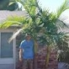 mature Washingtonia filifer... - last post by benr7132