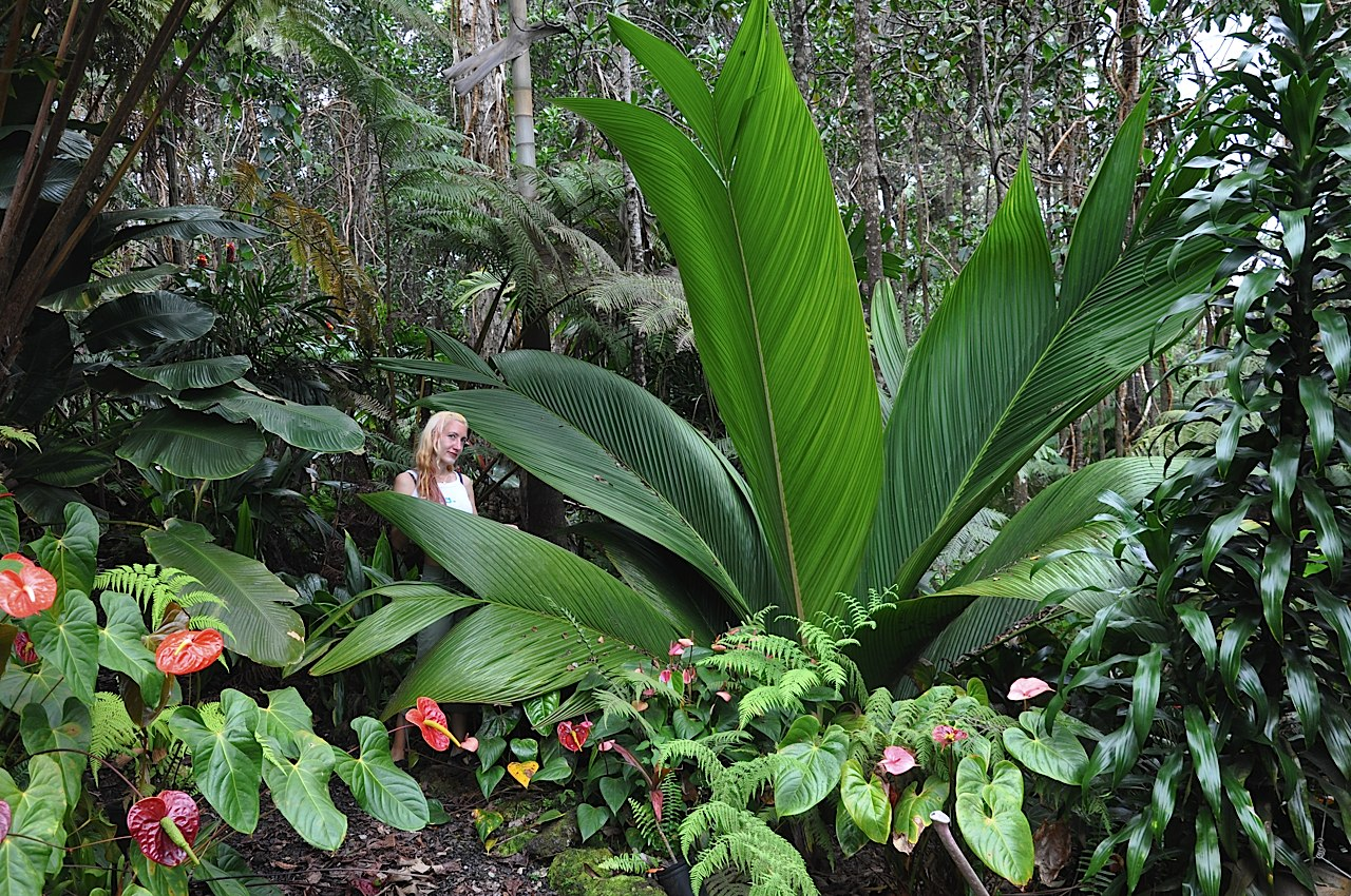 Some Indivdual Garden Palms