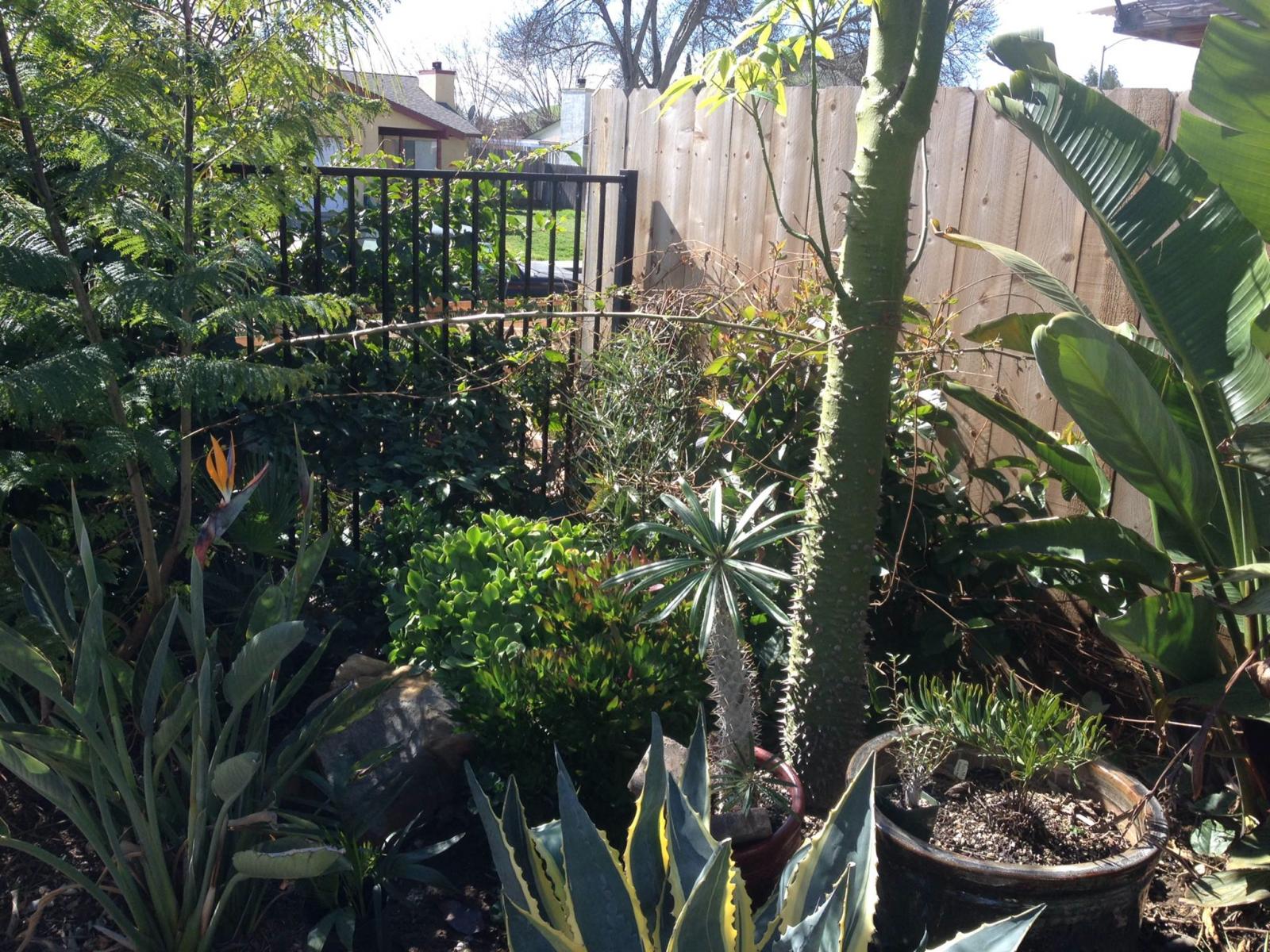 Garden 2 27 15