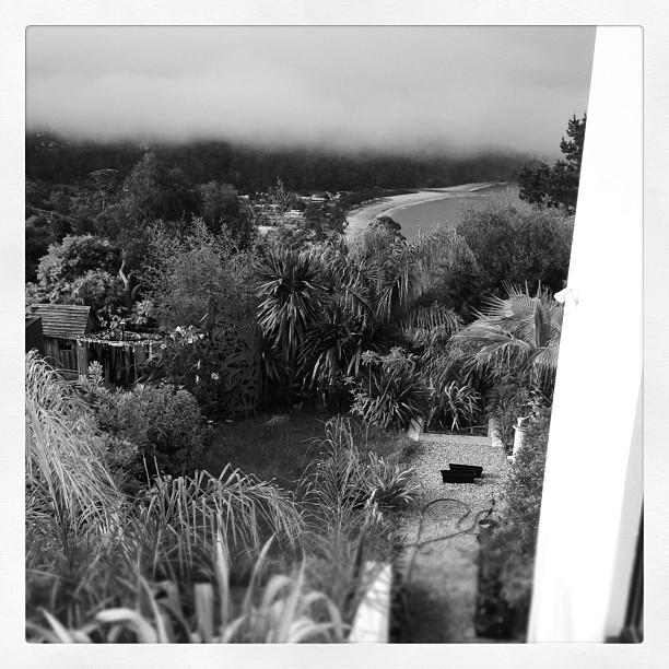 Kingston Beach Palm garden