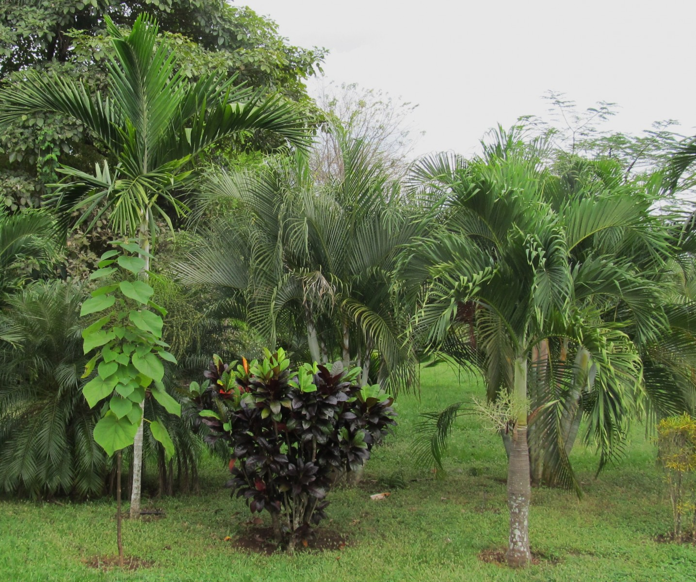 palms And gardens 054