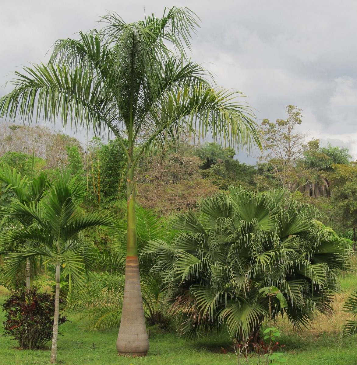 palms And gardens 056