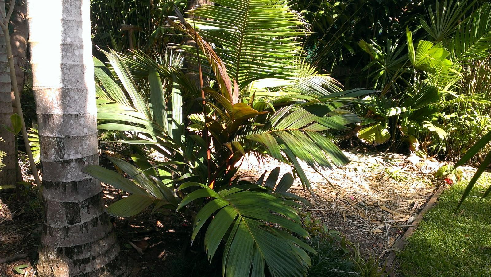 Garden Port Macquarie