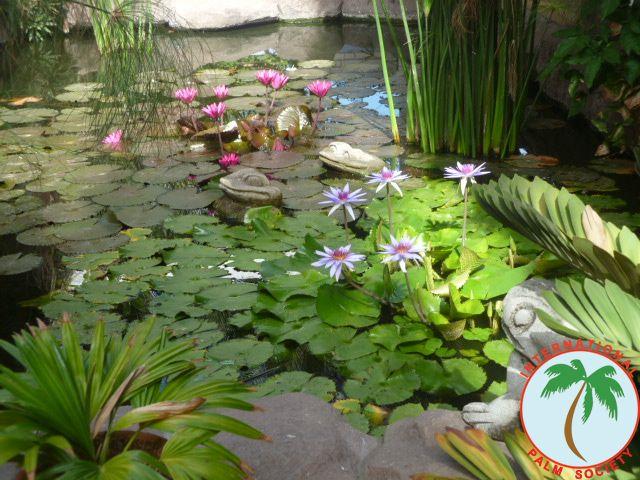 Peter Pacific's Guatemalan garden