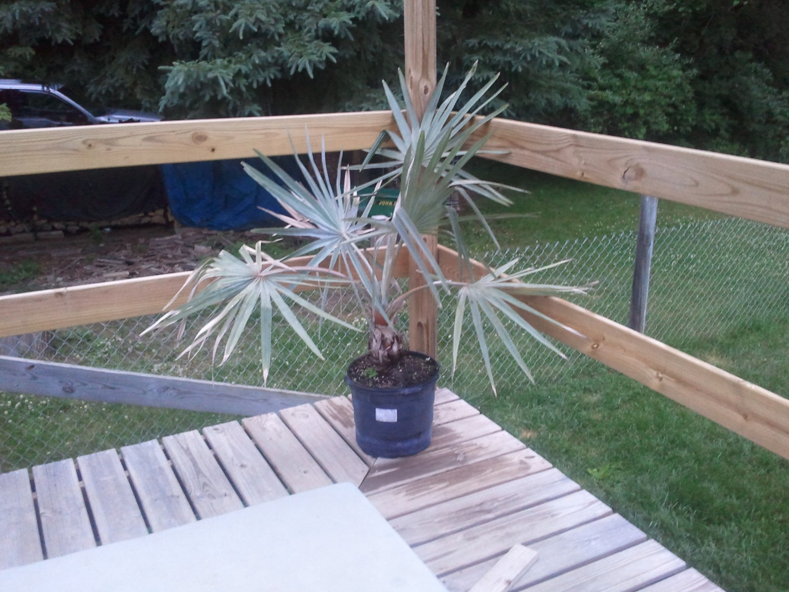 My Palms