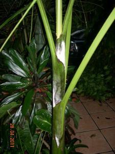 post-5709-030809300 1303942734_thumb.jpg