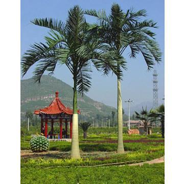 king palm  2.jpg