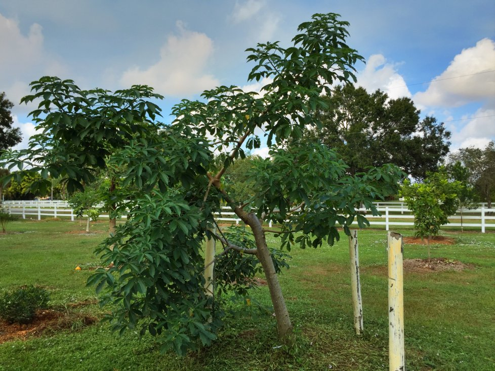 BaobabDigitata.jpg.b4dd85aa2807cbf16e717