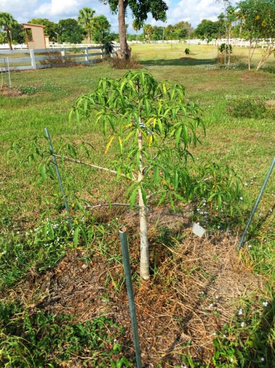 BaobabGrandidieri.thumb.jpg.10497a09a517