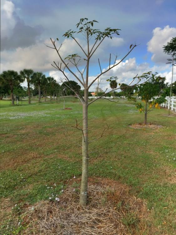 BaobabZa.thumb.jpg.a191af8f696fafe045959