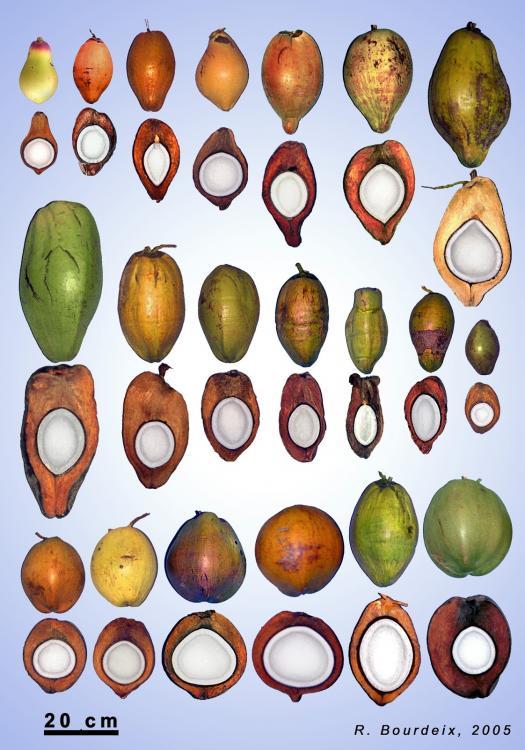 coconut shapes.JPG