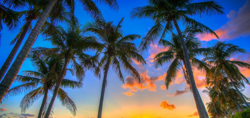 Coconut-Tree-Sunset.jpg