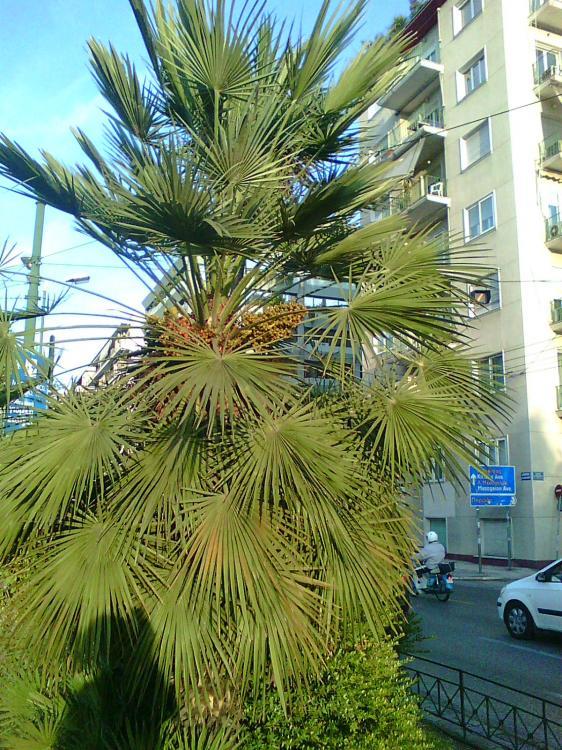 Photo0343.thumb.jpg.c513bf669530c46ac1b3