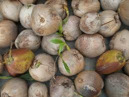 buah-kelapa.jpg