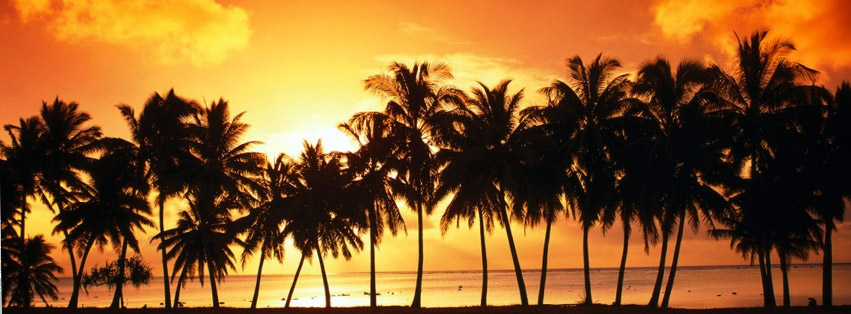 sunset-over-coconut-tree-at-beach.jpg