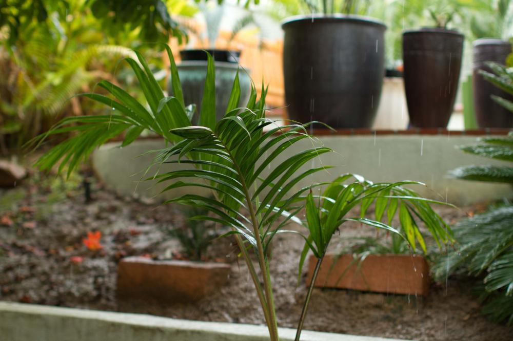20111112-IMG_9039.thumb.jpg.55924b869e5e