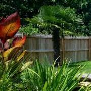 Ponds & Palms
