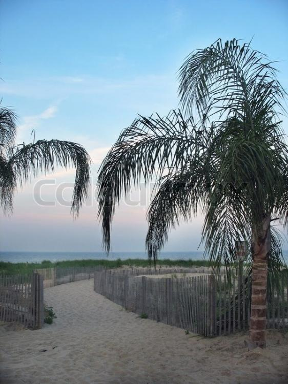 2384337-a-few-palm-trees-on-the-beach-in
