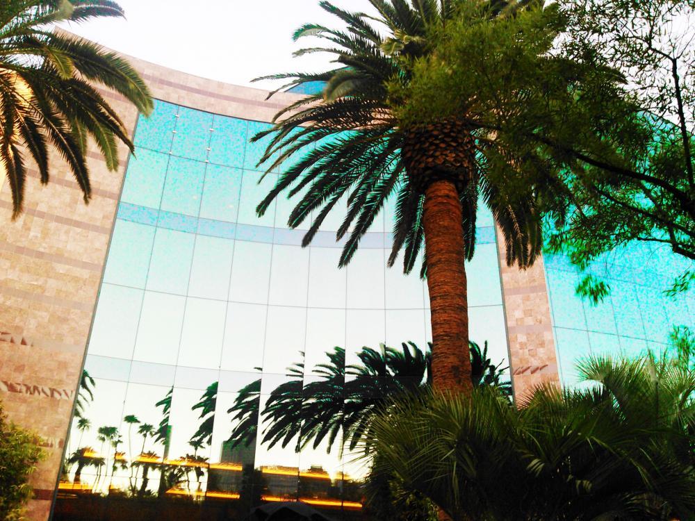 Mirrored tree (3).jpg
