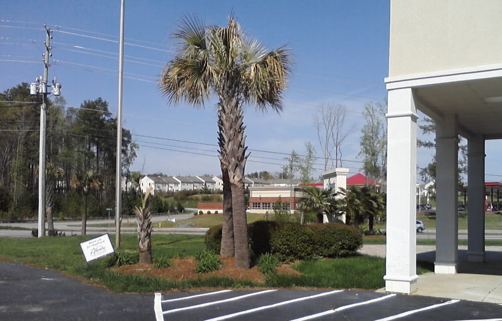 What States And Locations Do Palms Become Common To Scarce